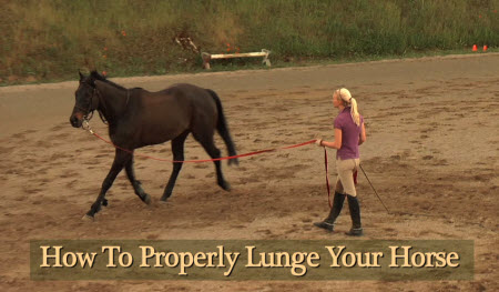 how to train a horse to lunge video
