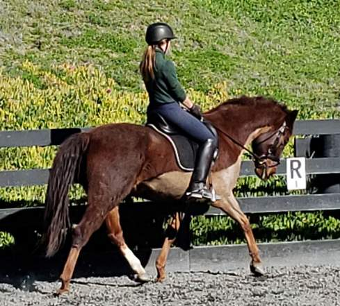 Search Results Horses For Lease All Breeds Classified