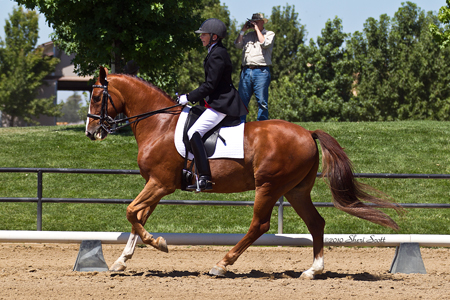 Barns Amp Trainers Showcase Bay Area Equestrian Network