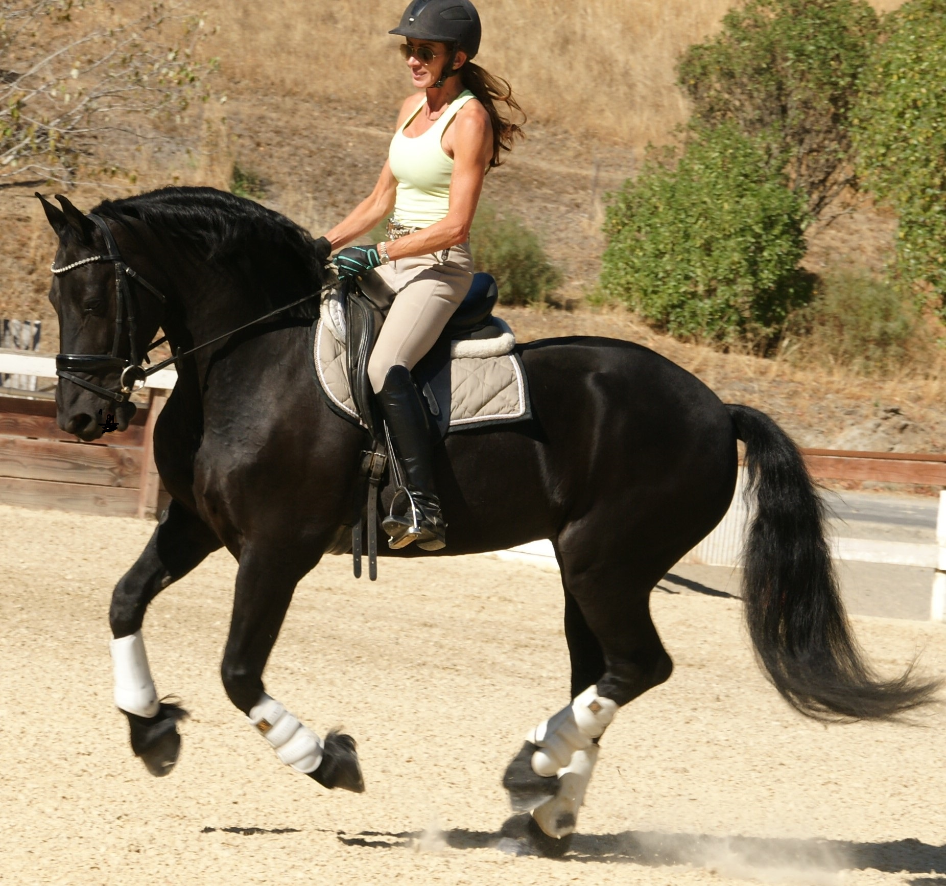 New price 6 yr old friesian gelding ideal family pleasure trail dressage horse play video 27 900 gelding black none age 6 16 0h 1200 lbs fhana