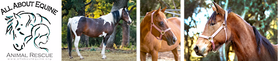 All About Horses rescue